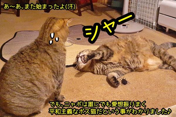 猫 ゴキブリ