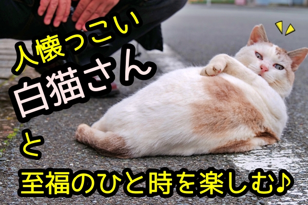 猫 人懐っこい