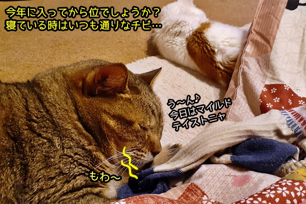 チビ 高血圧 猫
