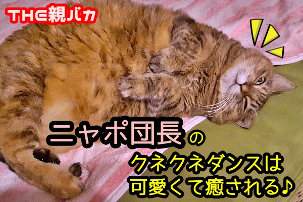 猫 クネクネ