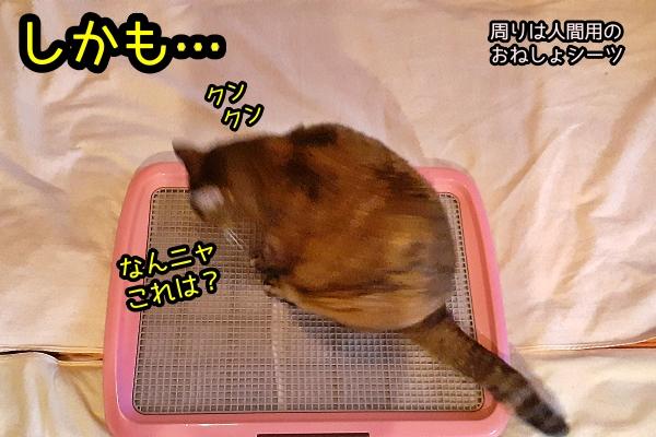 猫 トイレ問題