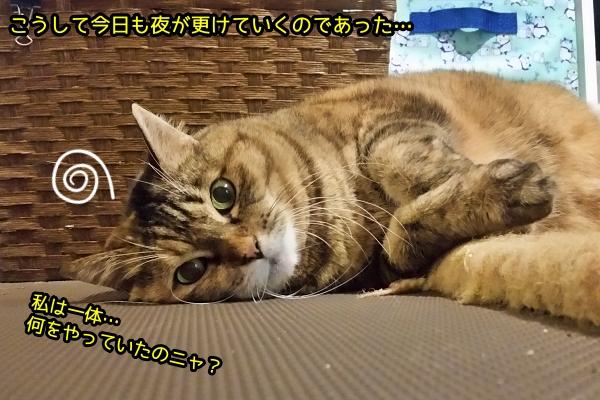 猫 くねくね