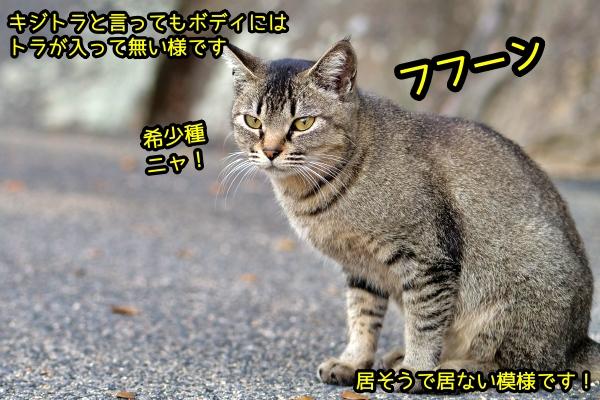 ニャポ旅72 尾道 その11