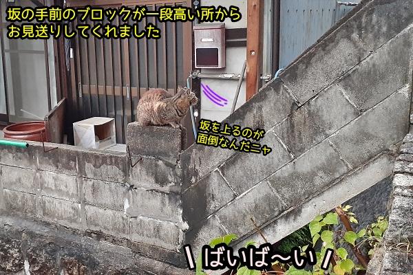 ニャポ旅72 尾道 その13