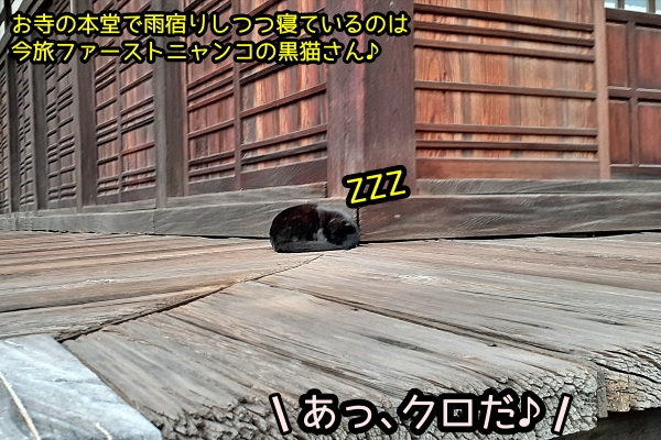 ニャポ旅72 尾道 黒猫