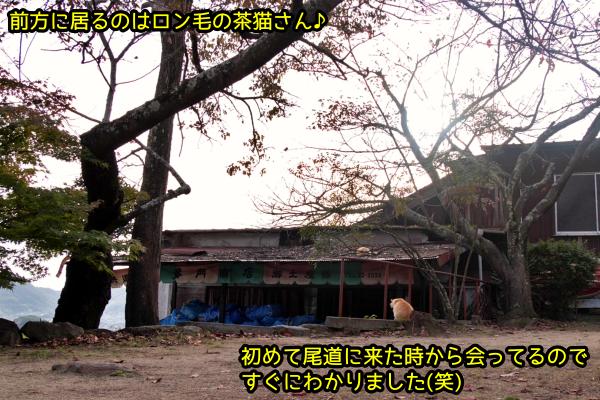ニャポ旅72 尾道