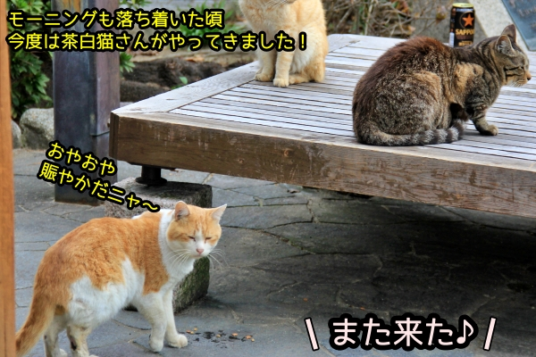 ニャポ旅72 その7 尾道猫