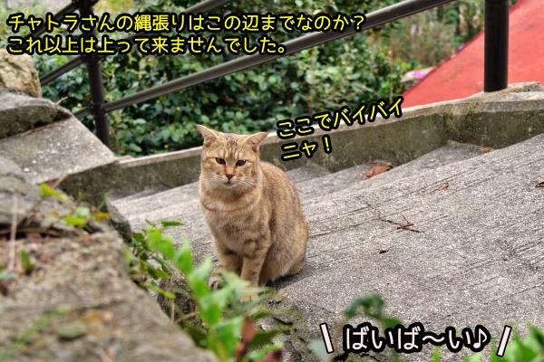 ニャポ旅72 尾道 坂 その9