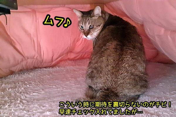 猫柄 こたつ 布団