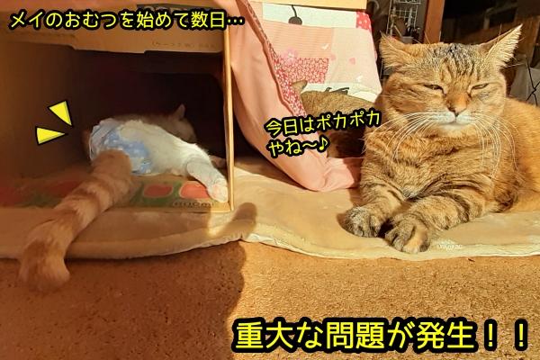 猫 おむつ