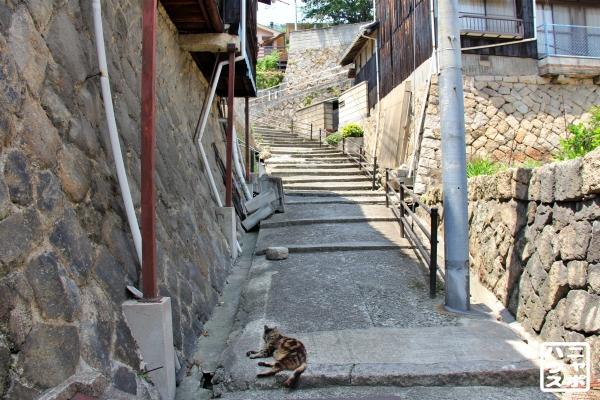 尾道 階段 猫
