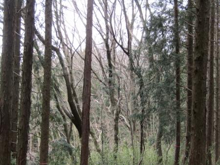 200112a茶臼山 (2)s