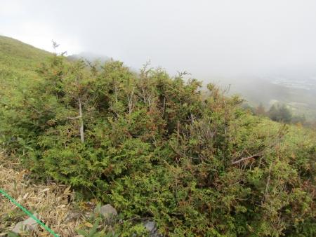 アスナロ191006湯ノ丸山 (1)s