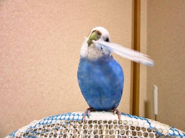 羽根遊び4