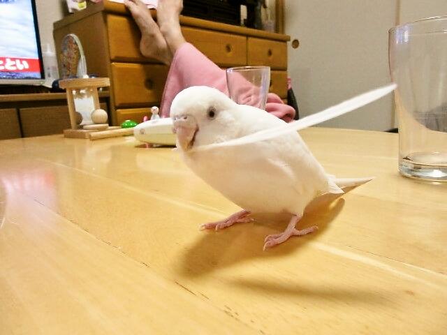 羽根遊び2
