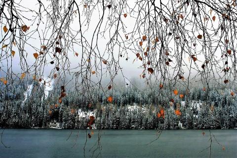 twigs-2941230_960_720.jpg