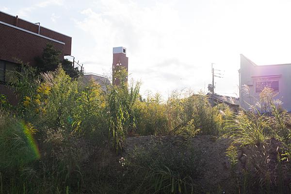 空き地の秋