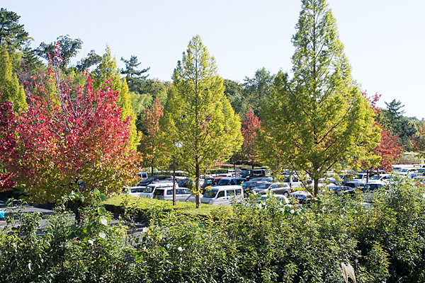 牧野が池緑地駐車場の紅葉