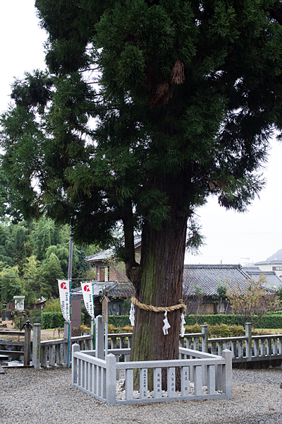 村国神社御神木