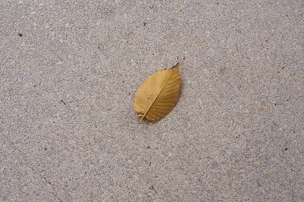 一葉の落ち葉