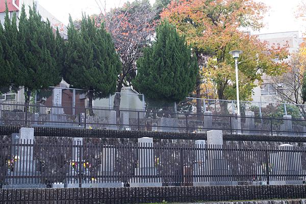墓と小学校と紅葉