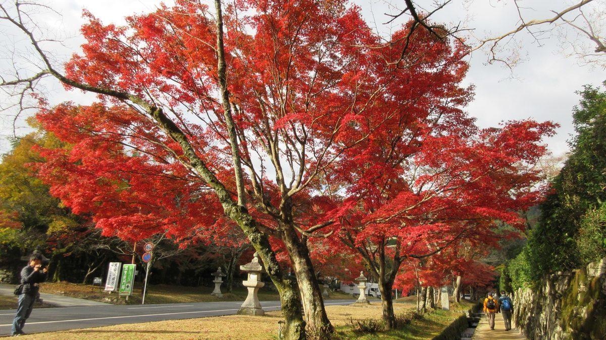 1911-06-坂本-IMG_3773