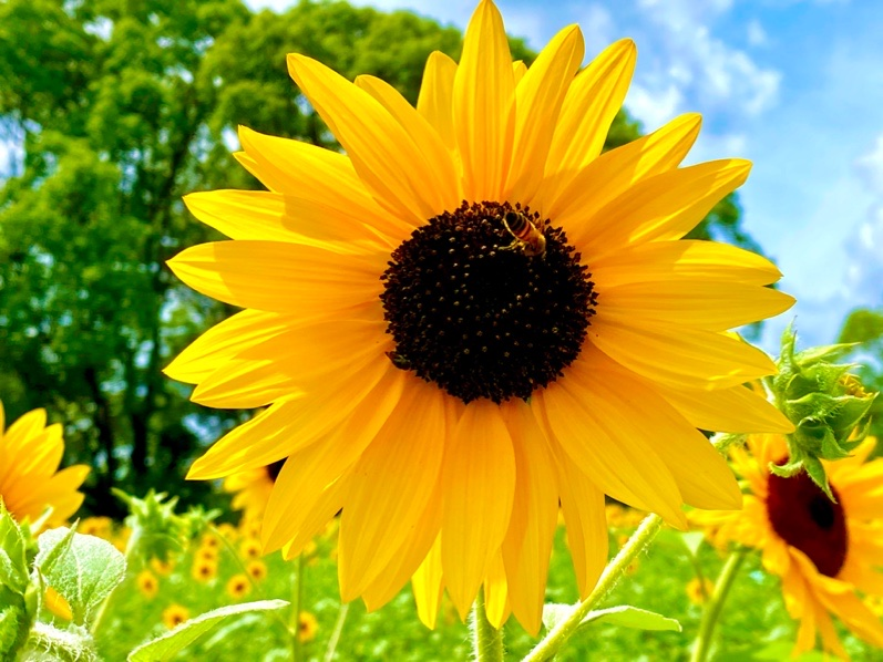fc2blog_2020081218593925c.jpg