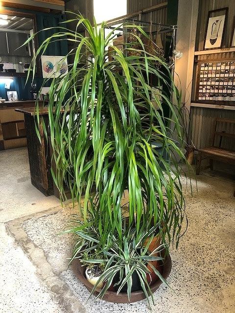 ステキ植物1