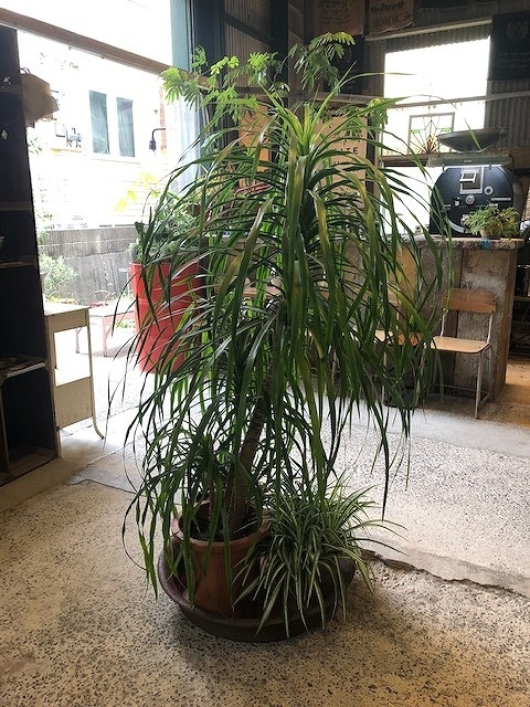 ステキ植物2