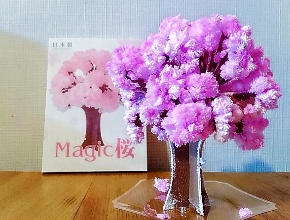 今年も大人気!!12時間で桜を咲かせられる【Magic桜】ならお部屋でお花見出来ちゃいます