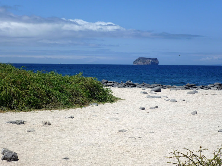 The_beach_at_North_Seymour_Island_in_the_Galapagos.jpeg