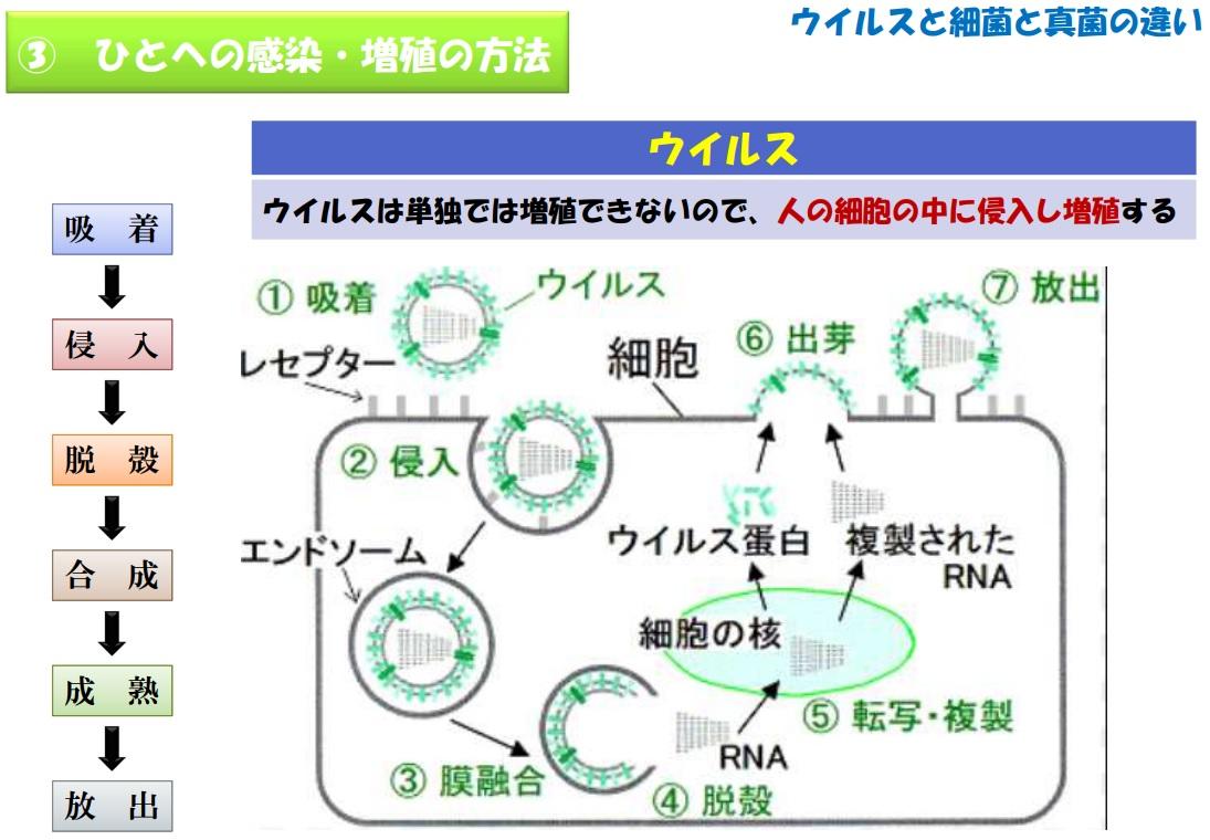 etsgwfaudisk4.jpg