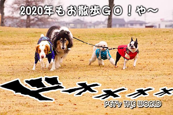 2020-01-03-16.jpg