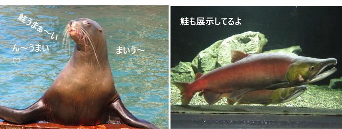 20191010鮭