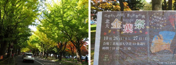 20191021北大銀杏並木