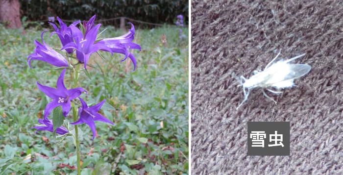 20191026豊平公園