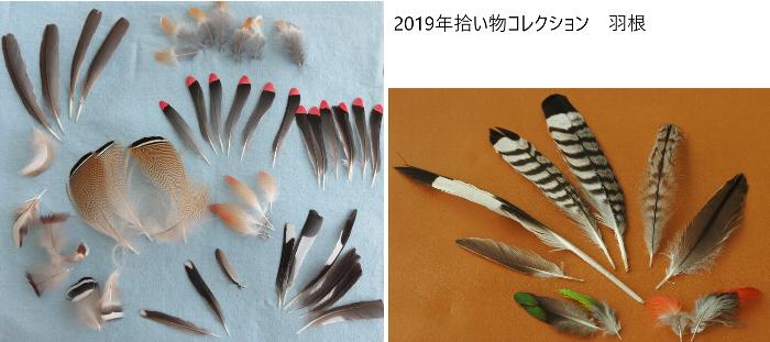 2019拾った羽根