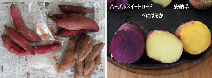 201208井澤農園サツマイモ
