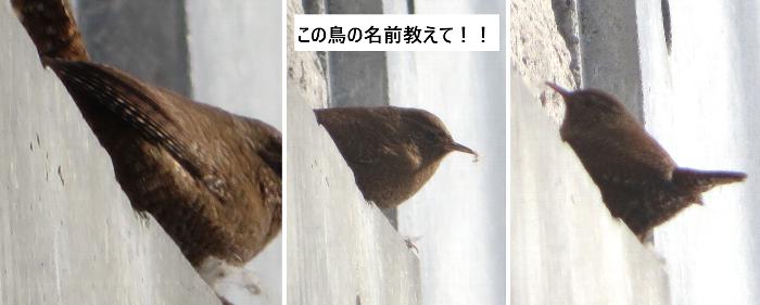 20200117名前を知らない鳥