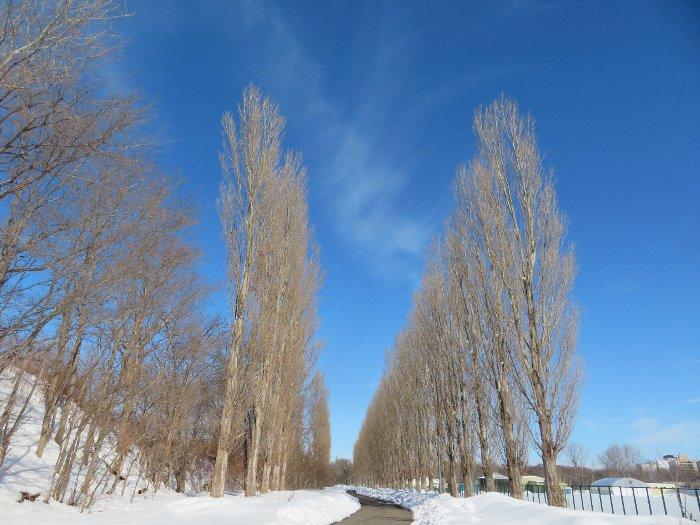 20200226北大平成ポプラ並木