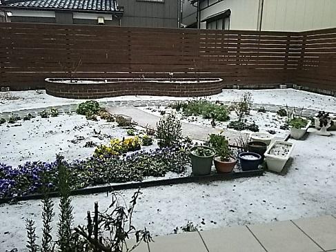 元日の雪化粧