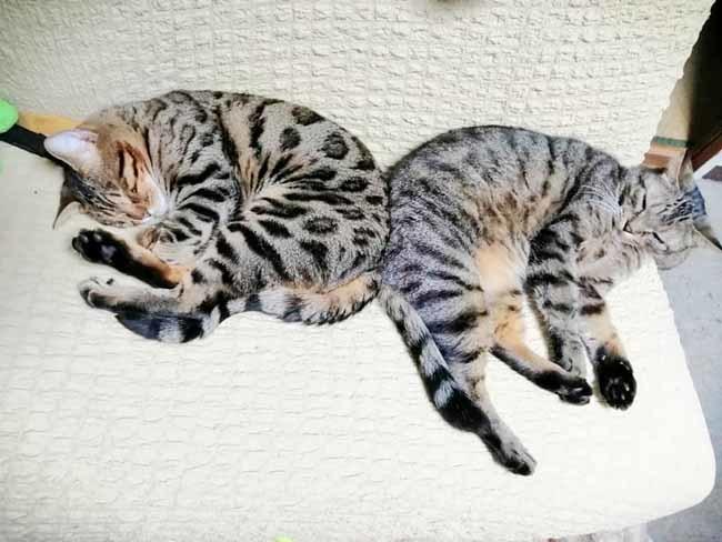 タビィ&リューヌ
