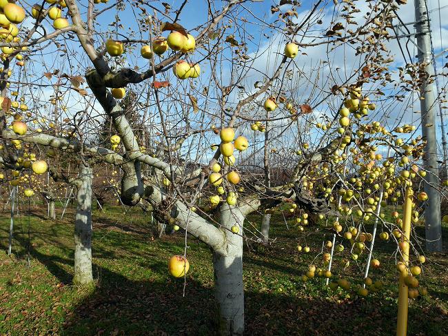 梅沢りんご園
