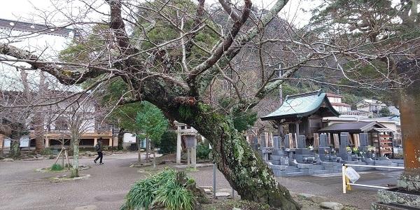 境内の古木