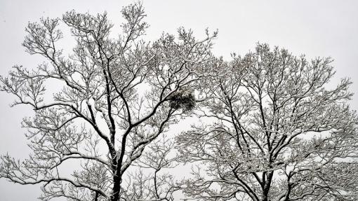 3978霧が谷201156