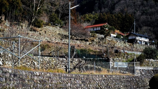 4016勝木大野201212