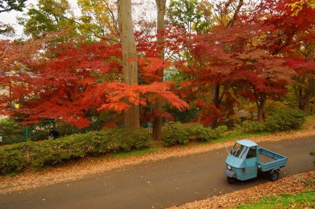 ピアジオと紅葉