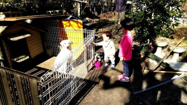 番犬と遊ぶ子供たち