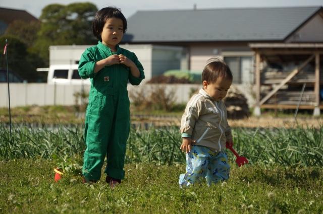 兄弟揃って田んぼで遊ぶ