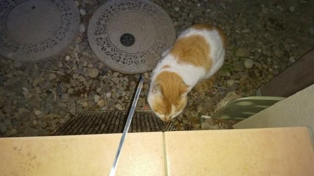 動じずに猫が網を舐める